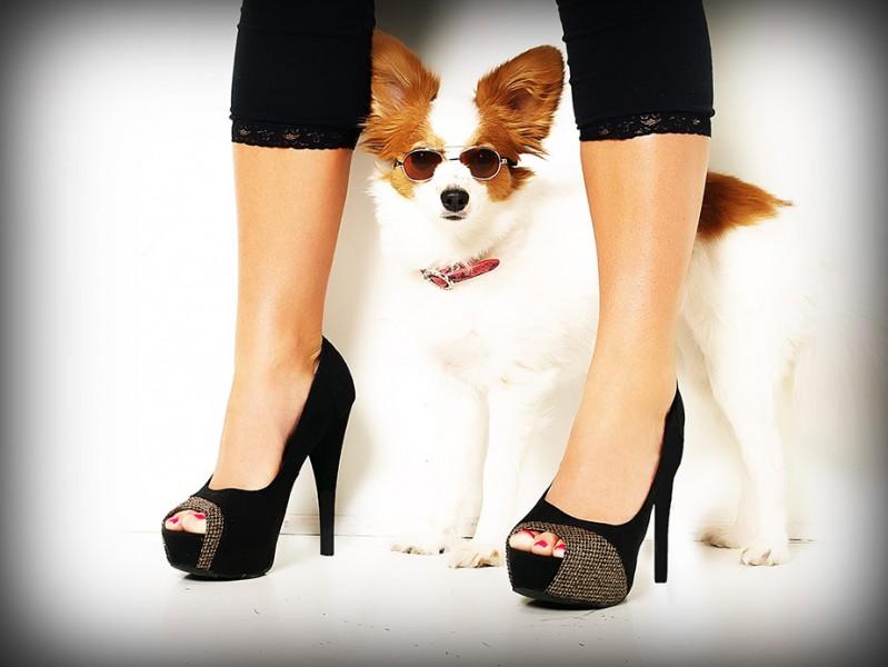 Pet Portraits Glamour Shots