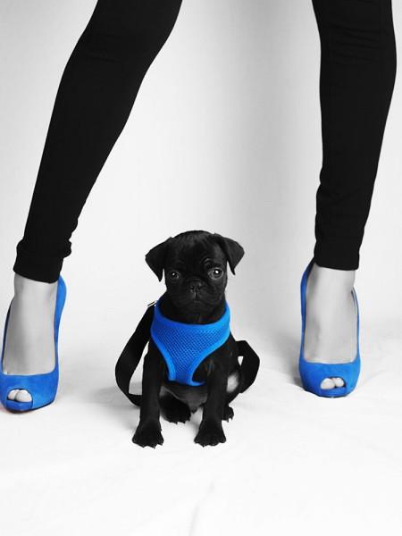Glamour Shots Pet Portrait