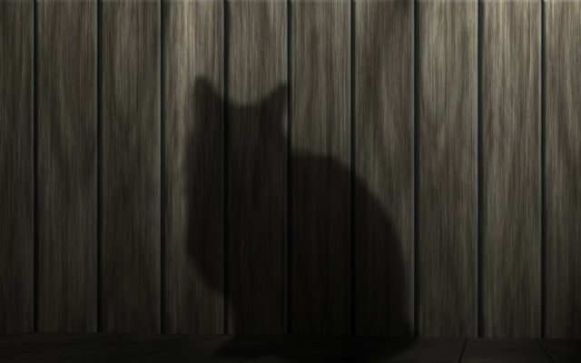 shadow of cat on wood wall